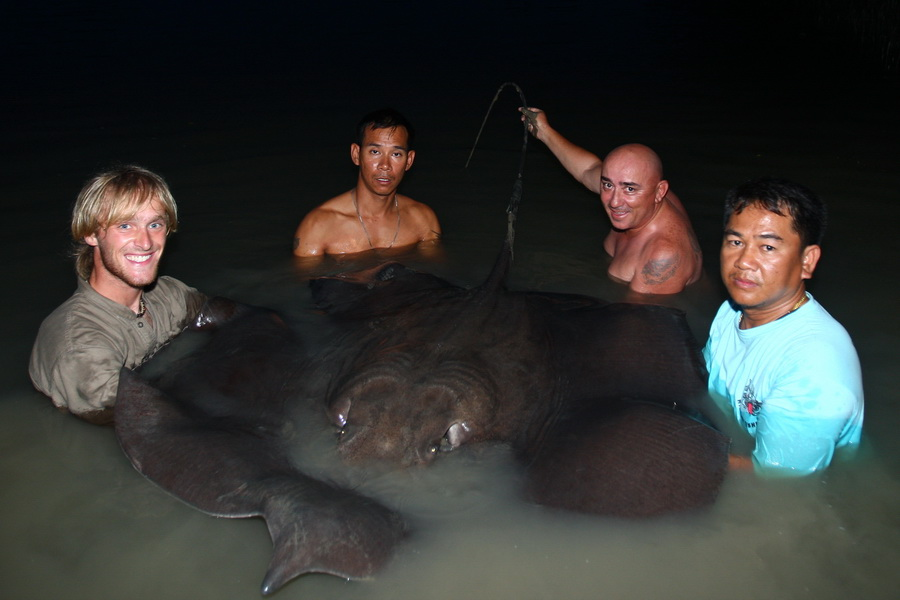 Image showing Giant freshwater stingray caught on fishing holiday in Thailand.