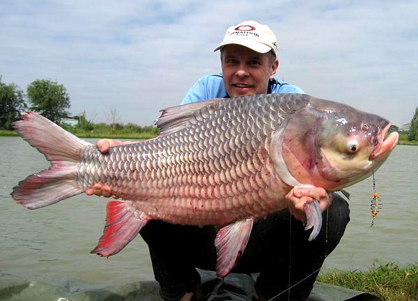 Photo of Giant Siamese carp on fishing holiday in Thailand