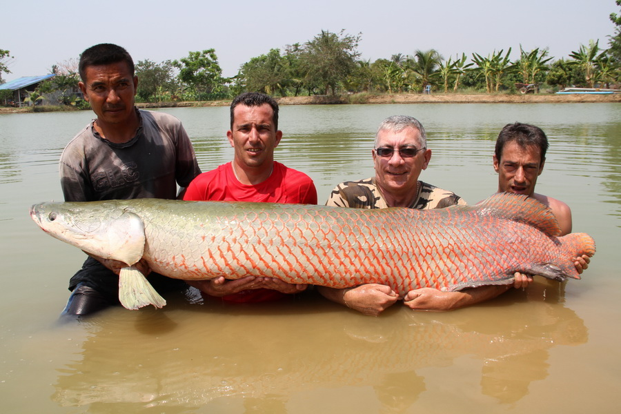 fly_fishing_thailand_arapaima6