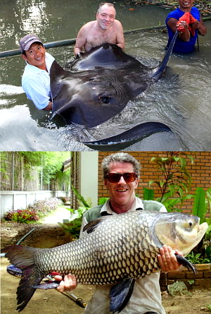 Photo of Giant Freshwater Stingray and Giant Siamese carp both caught fishing in Thailand in Bangkok and Chiang mai