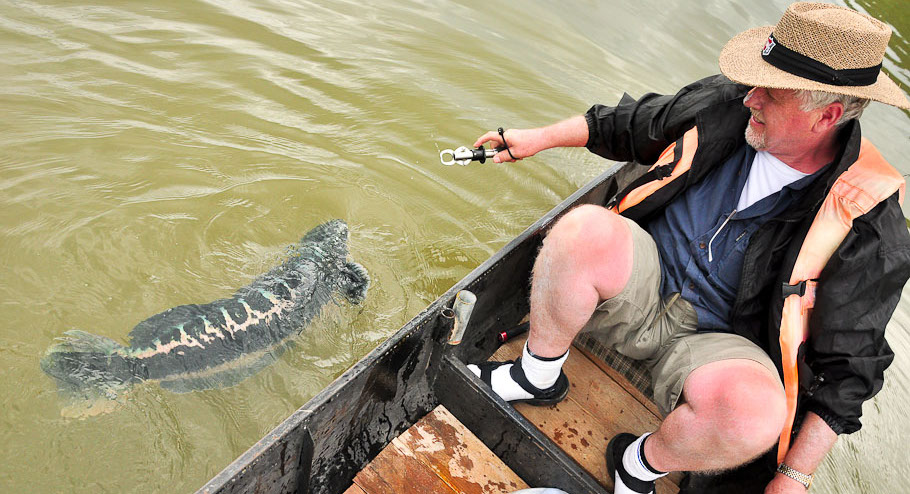 monster_size_snakehead_fishing_thailand
