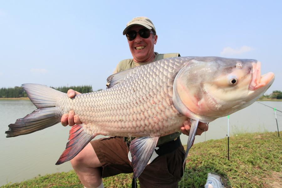 TH - Siamese giant carp