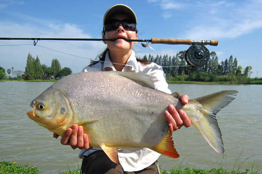 pacu_fly_fishing_Thailand