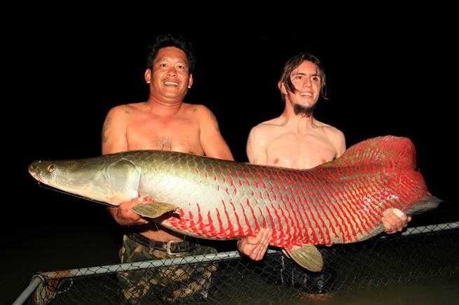 arapaima_fishing_thailand