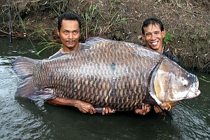 Image showing the largest carp ever caught on rod and line from Bungsamlan lake in Bangkok Thailand