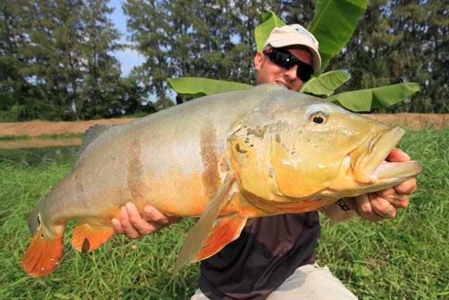 peacock_bass_fishing_thailand