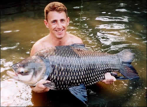 Allthough the Giant siamese carp is the biggest carp in the world it is not that well known that these monster carp are able to be caught while fishing in Thailand