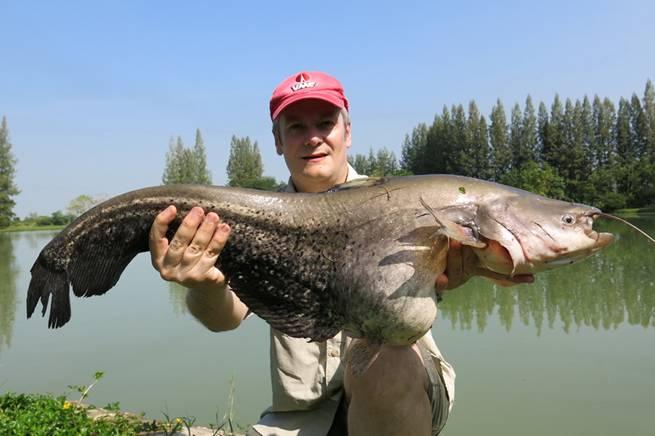 wallagoo_leeri_fishing_thailand