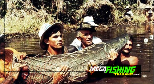 arapaima_caught_in_the_amazon