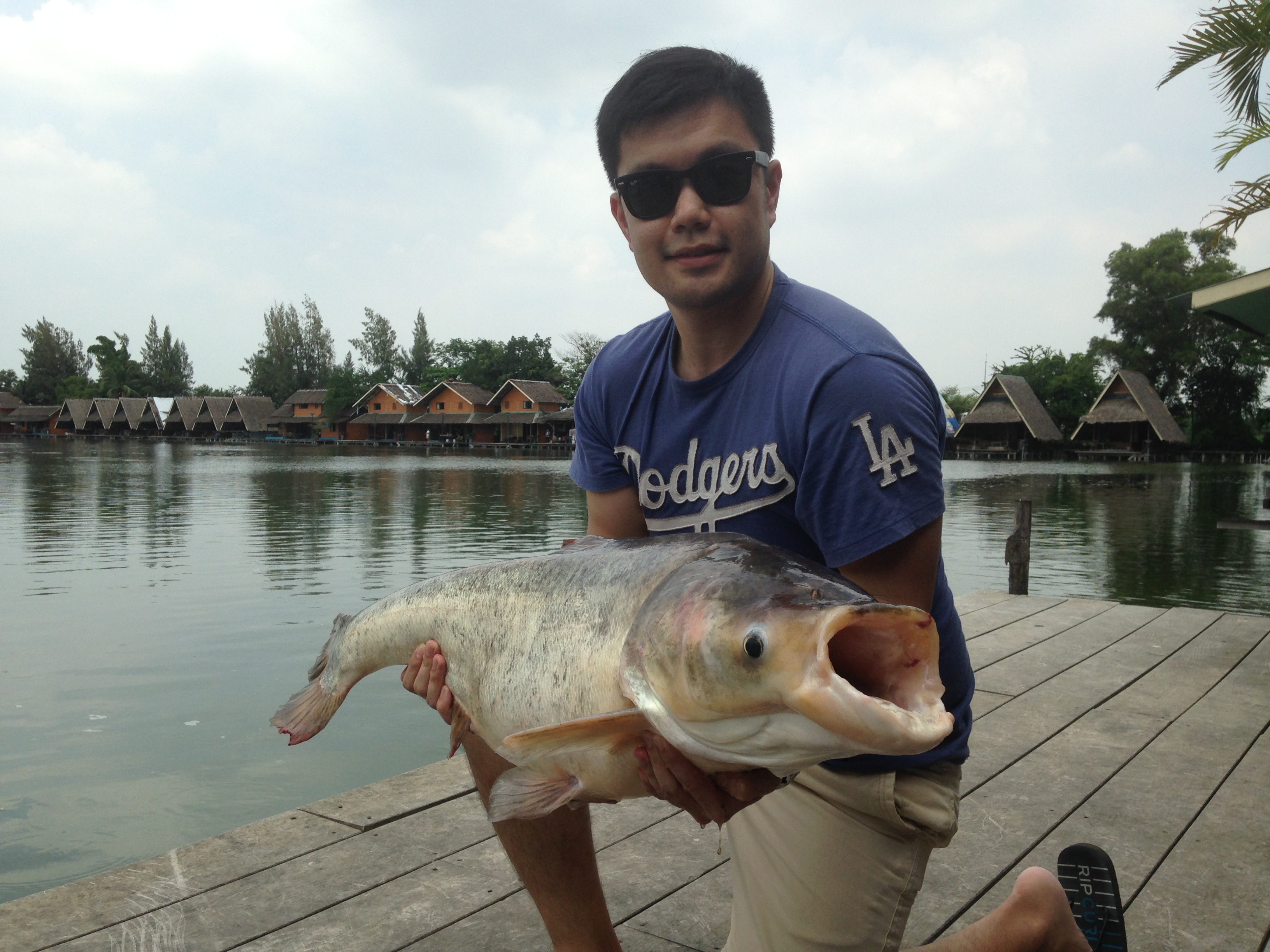 Big Head Chinese carp caught from Bungsamran fishing park Bangkok Thailand